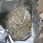 V autě jedoucím do Olomouce našli celníci marihuanu