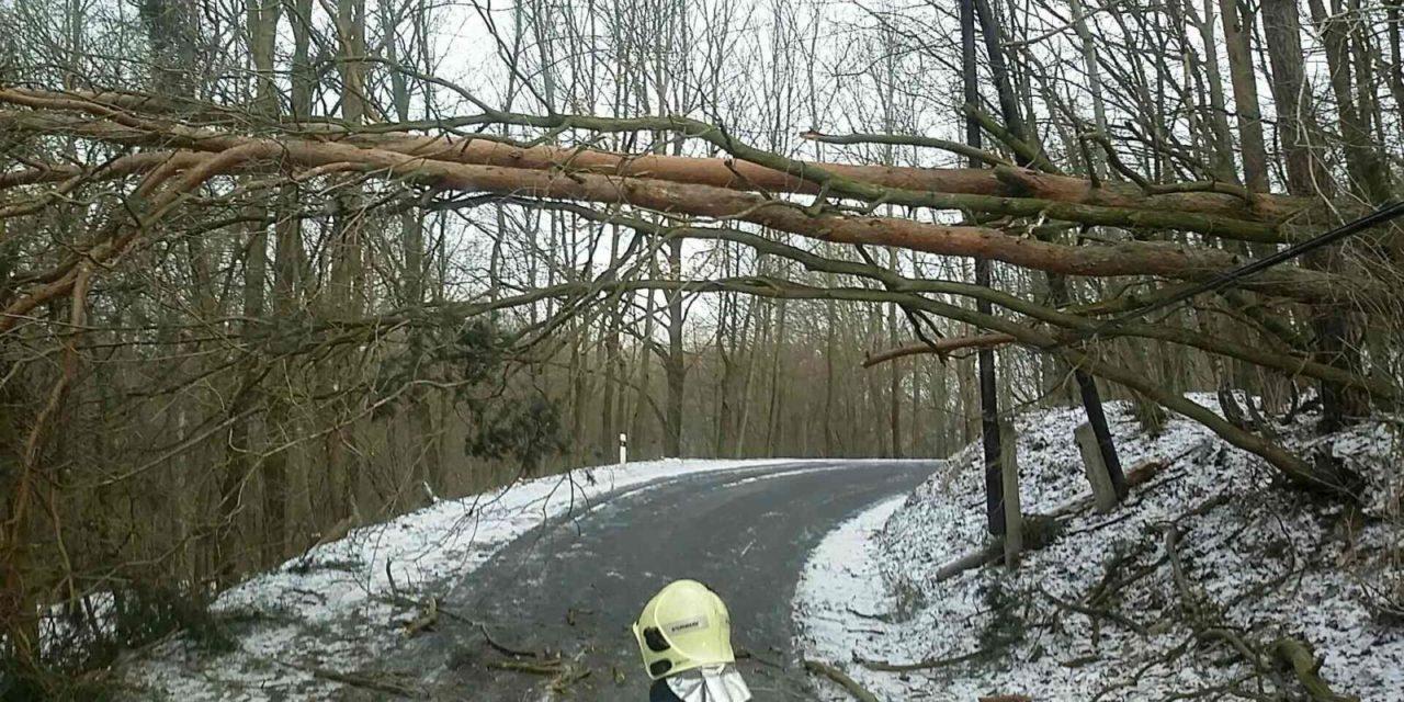 Šternberk kvůli kalamitě zakázal vstup do svých lesů
