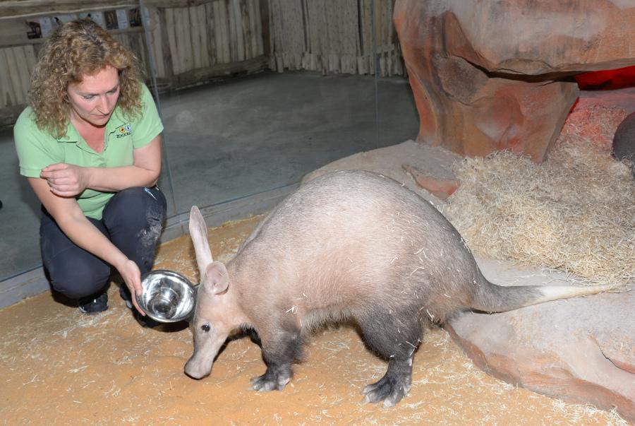 Zoo otevřela svůj nový pavilon Kalahari