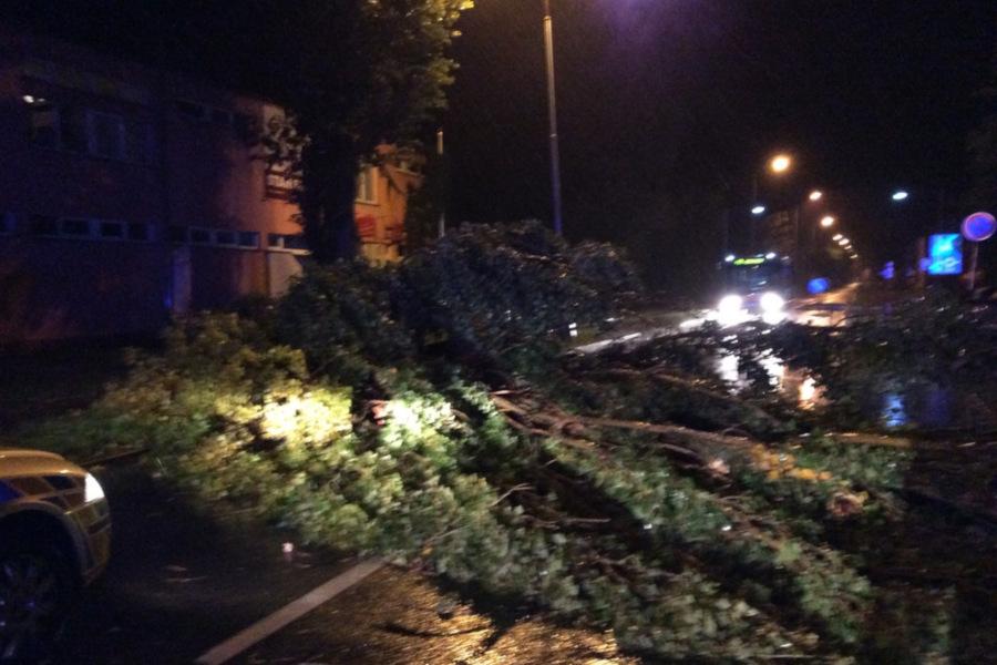 Na Lazeckou ulici v Olomouci spadl v  noci strom