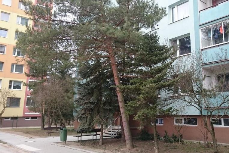 Ve Šternberku likvidují stromy po nedávné vichřici