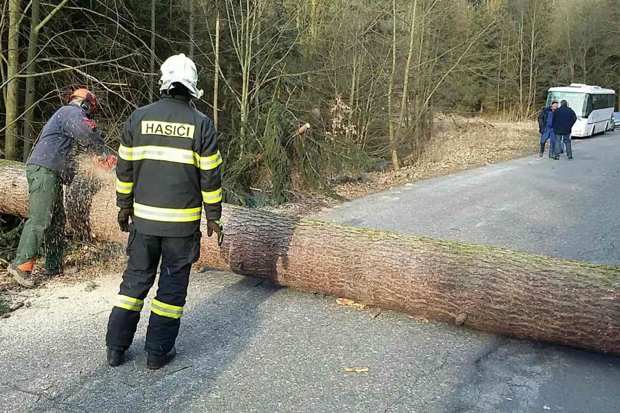 Lesy na Olomoucku a Šternbersku budou celé jaro uzavřené