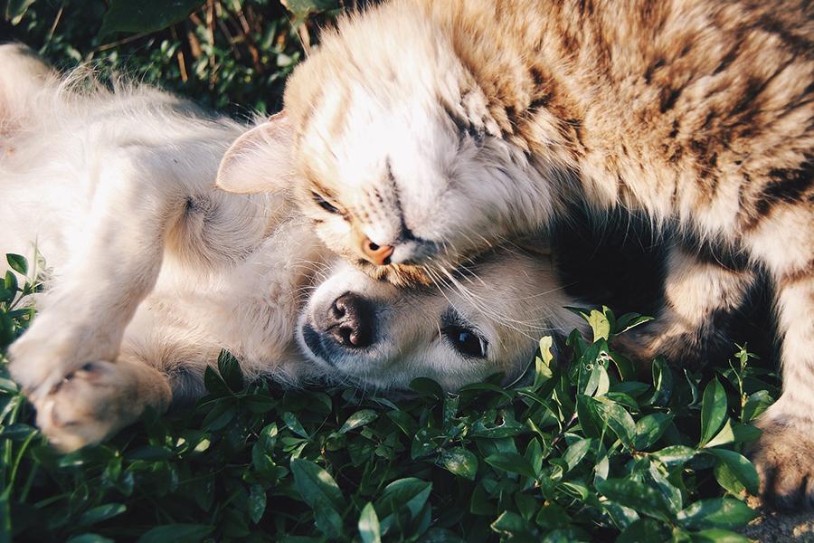 Psi a kočky potřebují pohyb a zdravou stravu